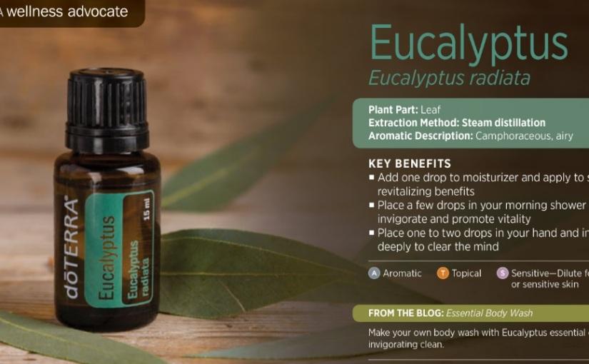 Eucalyptus: Body, Mind andSpirit
